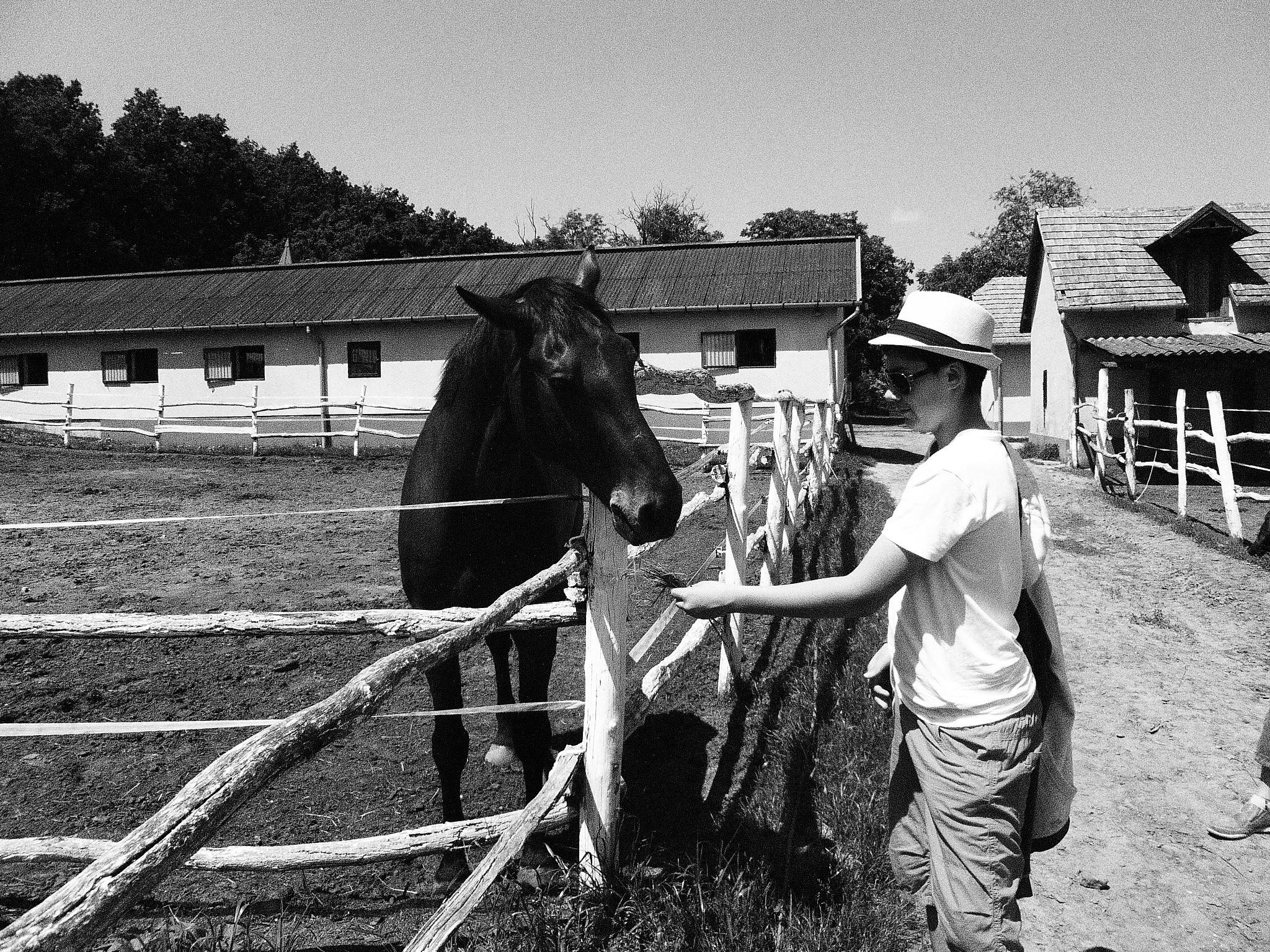 Mándy Iván: Csutak és a szürke ló